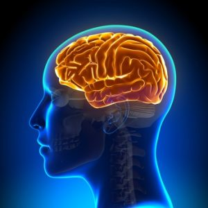 Alcoholism negatively impacts the brain, thus, raising the legal drinking age may be a positive solution.
